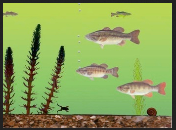 FIGURE STO Fish http-:blogs.hbr.org:2014:04:are-you-a-holistic-or-a-specific-thinker